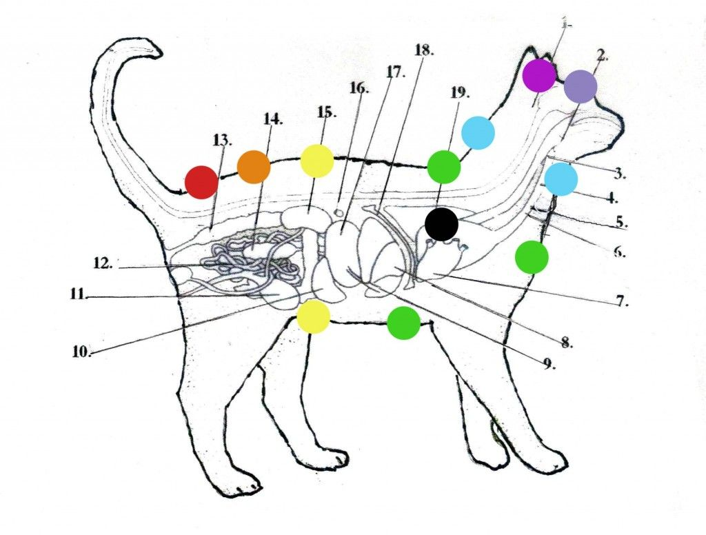 Cat_Chakra_1-1