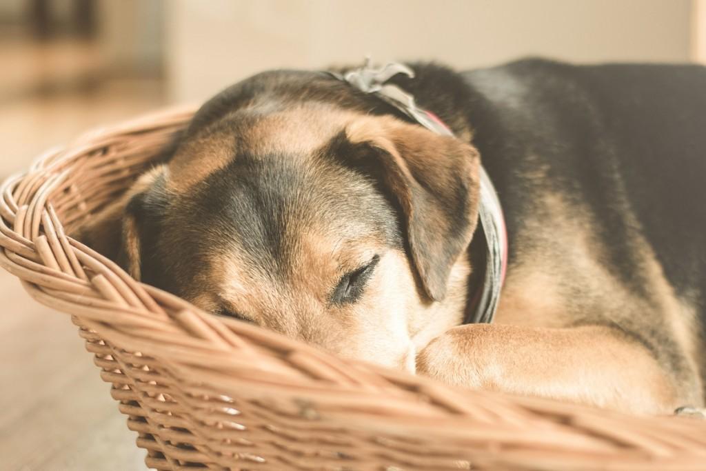 tres articulos sobre acupuntura en animales