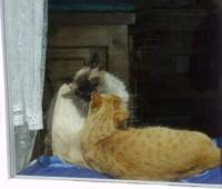 masaje emocional para animales
