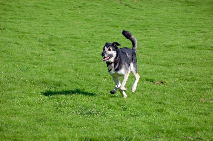 perro feliz corriendo