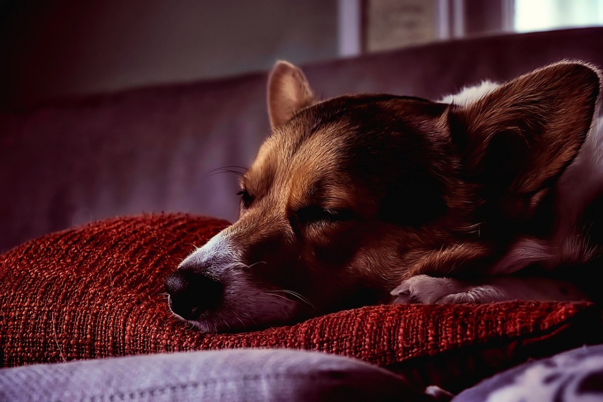 curso estres canino
