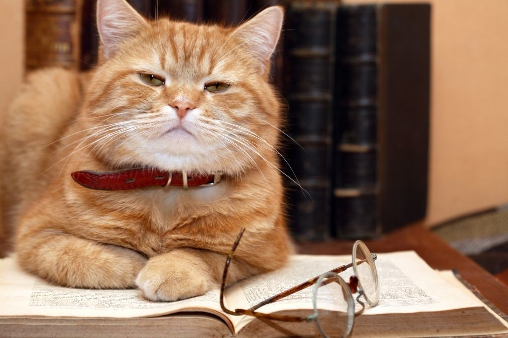 http://www.dreamstime.com/stock-images-scientist-cat-image16644564