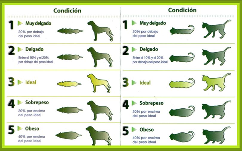 Foto dehttp://www.perros.com/foros/general/veterinaria/todos-me-dicen-que-mi-malinois-esta-gordo-.html