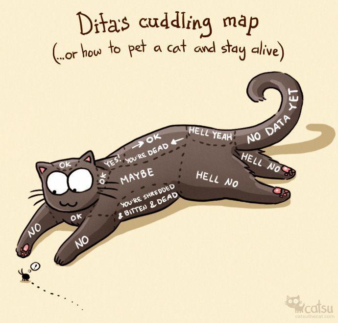 catsu the cat pinterest