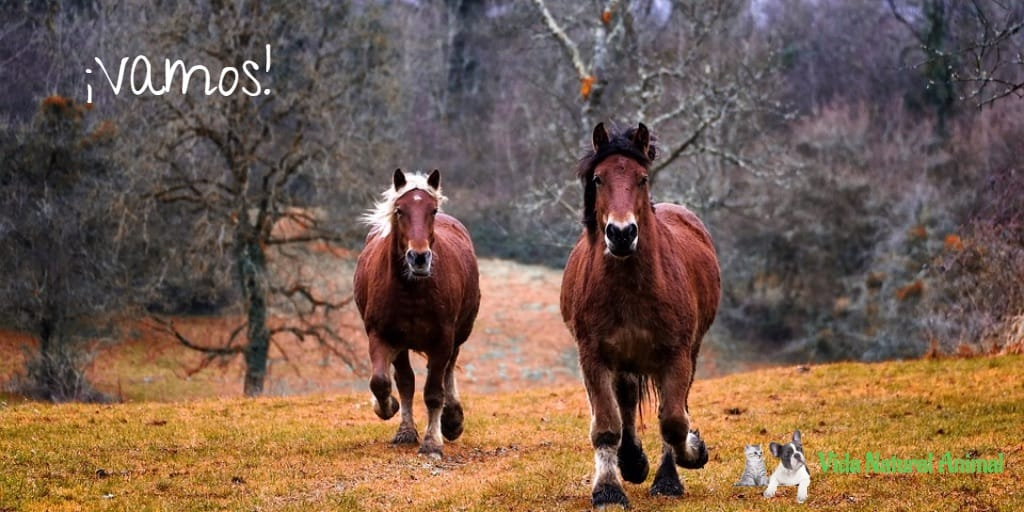 caballos y flores de bach