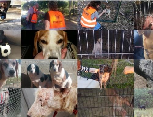 Localizania y tutorial de Miedo en Perros