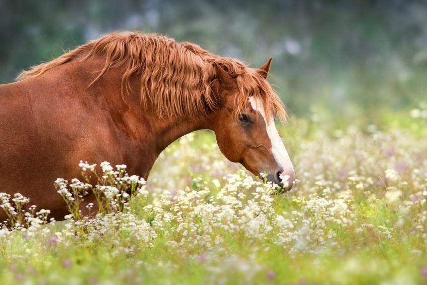 caballos y flores de bach equilibrar emociones