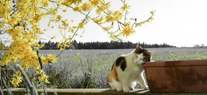 que debe tener un botiquin homeopatico para mascotas