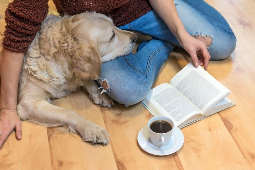 perro humano calma lectura