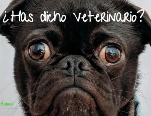 Mi perro no quiere ir al veterinario. Flores de Bach para llevar mejor este «mal» momento…