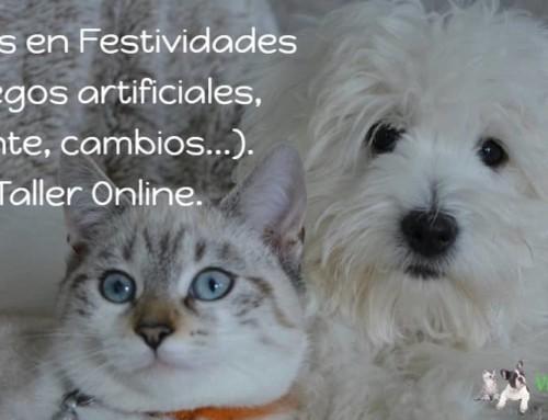 Curso online: el miedo, mi compi (perro o gato) y las Festividades