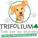 fundacion trifolium