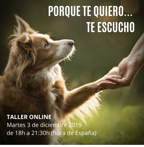 taller animale comunicacion meditacion
