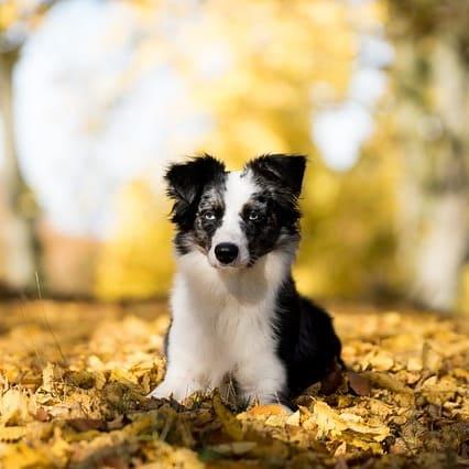 Terapias naturales que mejoran la convivencia con tu perro