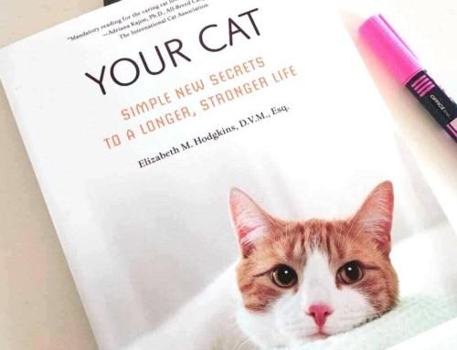 Alimentación para mi gato: si no quiero darle pienso seco, entonces qué le doy?