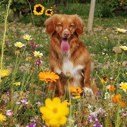 flores de bach y perros