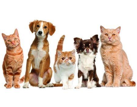 veterinaria alternativa bcn