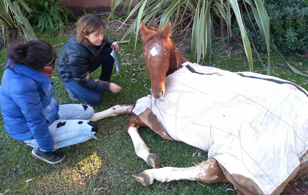 entrevista a la veterinaria homeopata para perros y gatos lucila ferrini