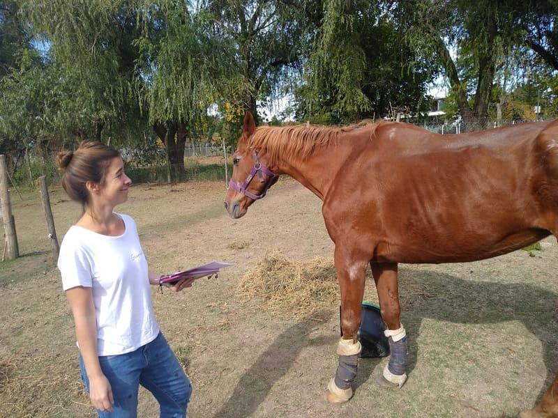 lucila ferrini homeopata caballo