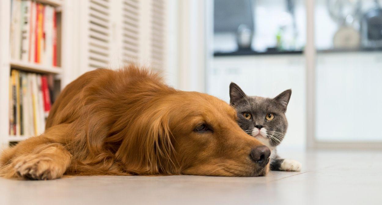 Fortaleciendo el Sistema Inmune de Perros y Gatos